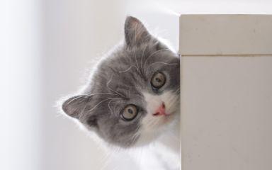 Koťátko přichází domů