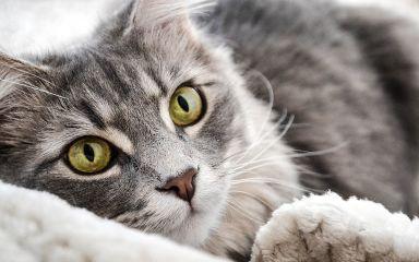 Októbrové akcie pre mačky