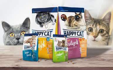 Akce pro kočky na listopad