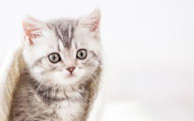 Správne kŕmenie mačiatok