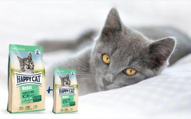 Augustové akcie pre mačky