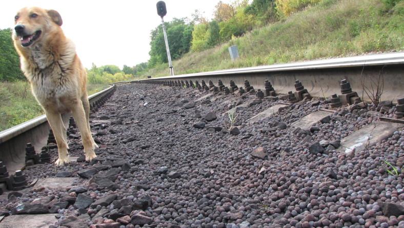 Бывший сотрудник Качканарского ГОКа осужден за хищение 260 тонн железного окатыша.