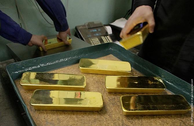 Директор артели незаконно продал 10 слитков золота, но попал под амнистию.