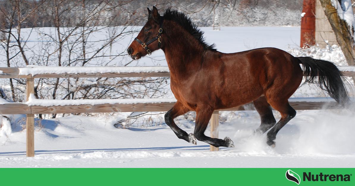 horse runnings in snow