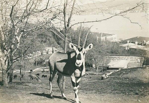 eski-istanbul-dan-nostaljik-fotograflar-istanbul-eski-istanbul-1679524