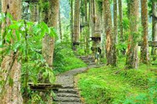 baturraden-adventure-forest-2