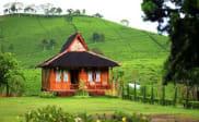 Rumah Kayu Kelapa di Kebun Teh Malabar Pangalengan