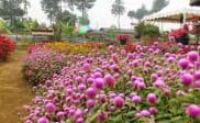 Kebun Begonia Lembang, Bandung