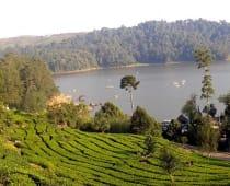 Situ Patenggang Ciwidey dikelilingi kebun teh