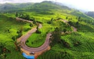 Segarnya Wisata di Perkebunan Teh Rancabali Ciwidey, Bandung