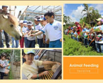 Animal Feeding di Jendela Alam