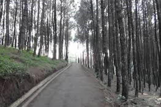 Hutan Pinus di Puncak Bintang Bandung
