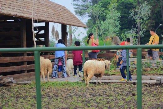 Berinteraksi dengan Hewan di Farmhouse Lembang