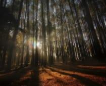 Hutan Pinus Imogiri Bantul Jogja