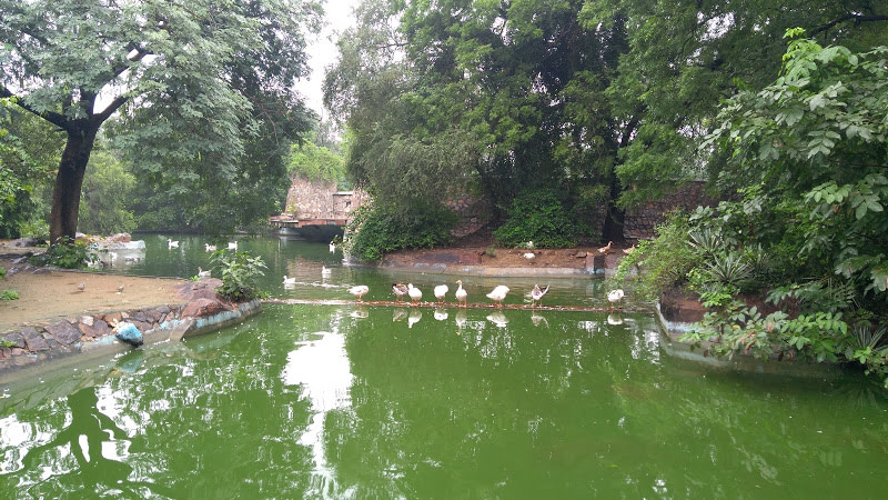 Parks With Lakes In Delhi To Enjoy A Scenic View So Delhi