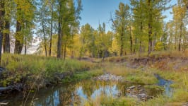 370129 80 St W, Rural Foothills M.D. - Your Forest Retreat