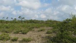 Cage Point, Marsh Harbour, Abaco, BS - Image 13