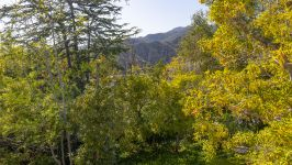 1550 Amalfi Dr, Pacific Palisades, Los Angeles, CA, US - Image 16