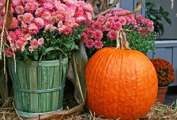 5 Fall Flowers You Need To Enjoy This Season P G Everyday United