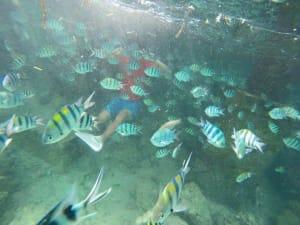 cebu tour pescador island moalboal