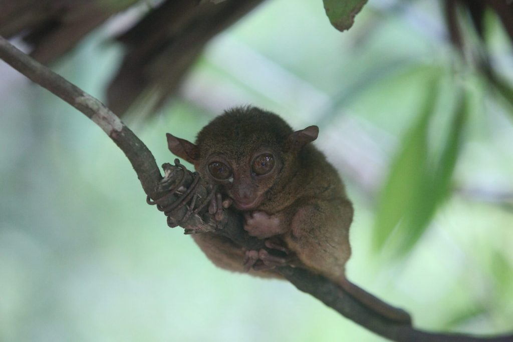 bohol tour package tarsier