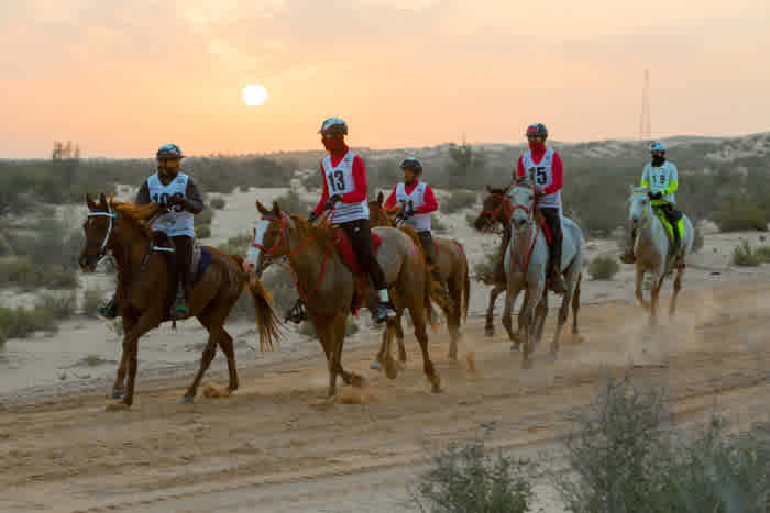 Al Wathba Emirates International Endurance Village