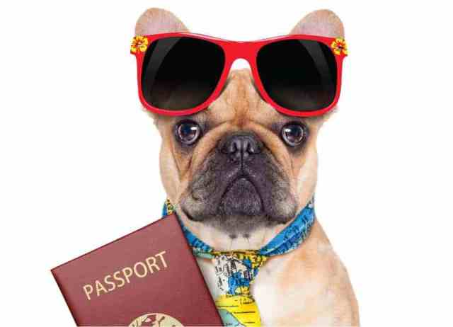 why you take out travel insurance for your pets