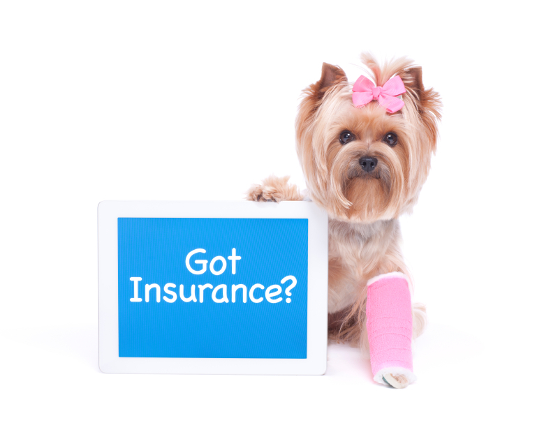 how to choose the right  pet insurance for your pet?