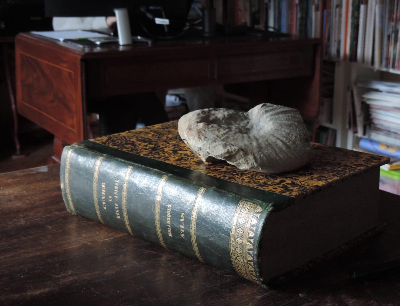 Sarà stata un'ammonite la conchiglia fossile del poeta Zanella?