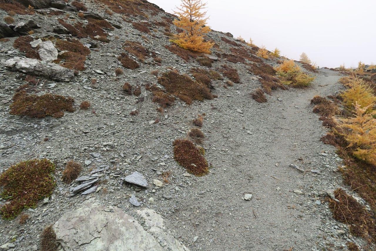 08. La fascia di roccia sbriciolata segna il contatto delle serpentiniti con le sovrastanti metabasiti. Nell'antico fondo oceanico questo era il passaggio dalle rocce del mantello ai magmi della crosta.