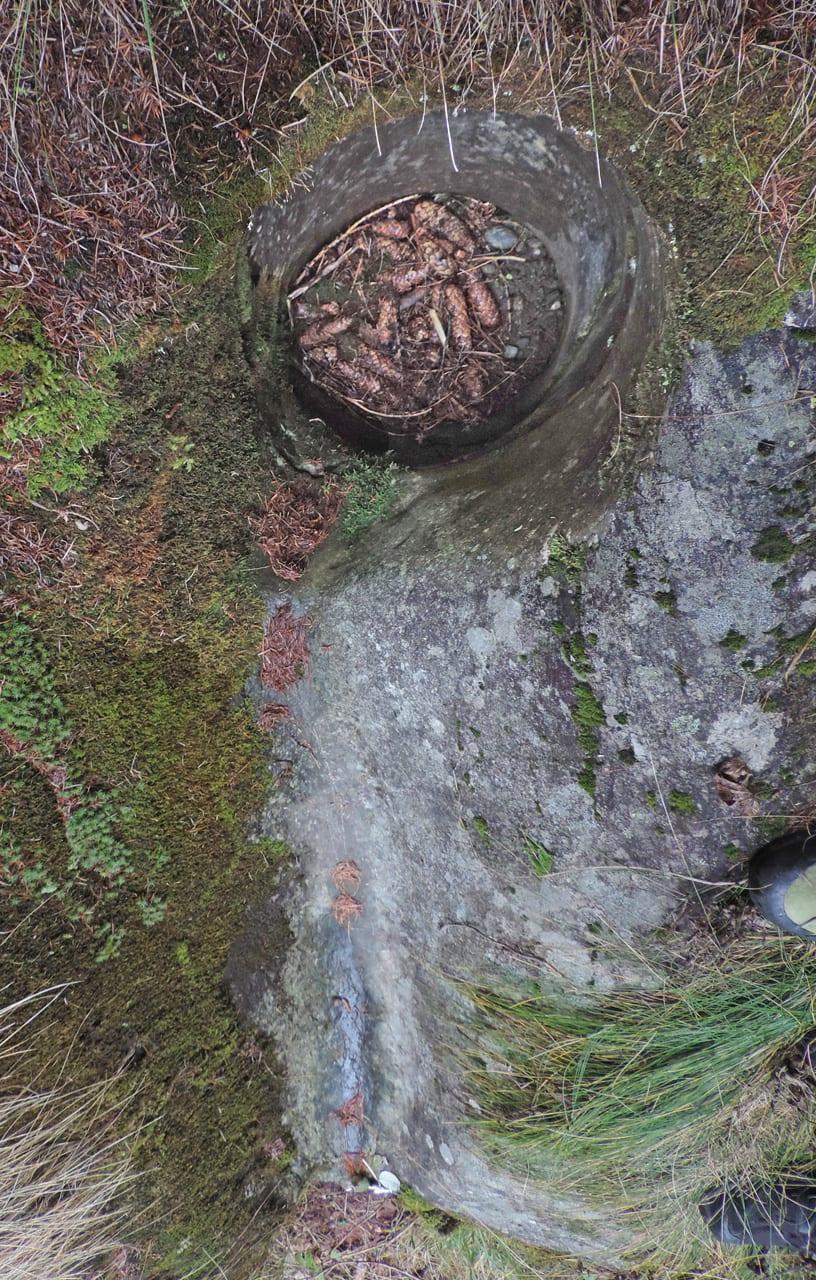 14. Bella e un po' enigmatica, la Marmitta dei Giganti è scavata in un affioramento di serpentinite appena visibile nell'erba.