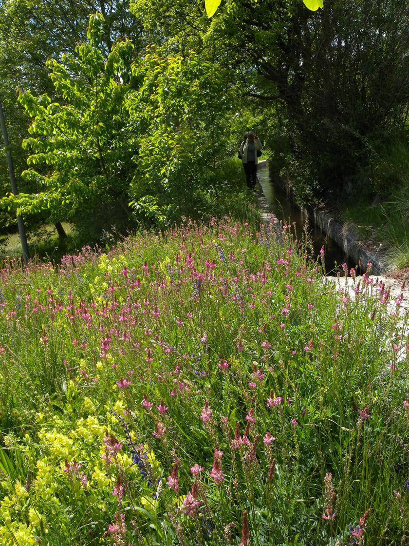11. Questo prato ben irrigato a lupinella testimonia dell'utilità delle acque del canale per produrre foraggio.