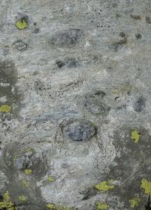 01. Des cailloux de quartz bien arrondis sont parsemés dans ce conglomérat au ciment feuilleté.
