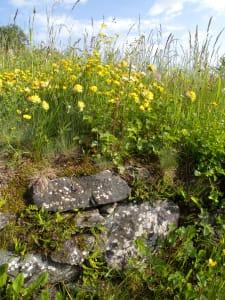 6.Biodiversità su muretto di anfibolite. Spigoli vivi, provenienza da detrito di falda. Érèsaz, Émarèse.