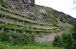 11.Terrazzamenti in metatorbidite calcarea a sostegno delle vigne di Morgex e La Salle.