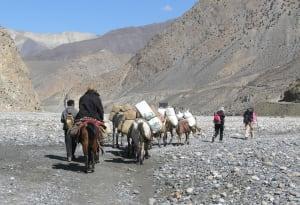 9. Carovana mercantile che attraversa una catena montuosa nel Mustang, Nepal.