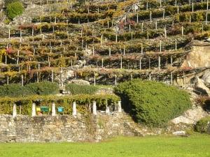 15.Terrazzamenti di vigne su corpo di frana in micascisto e metagranitoide. Donnas.