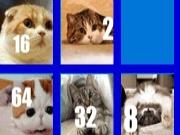 2048 Cats