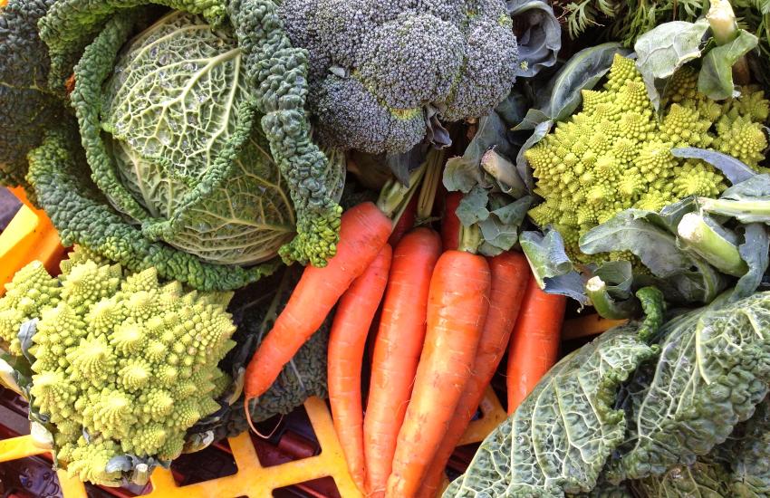 Blaencamel Organic Farm Shop