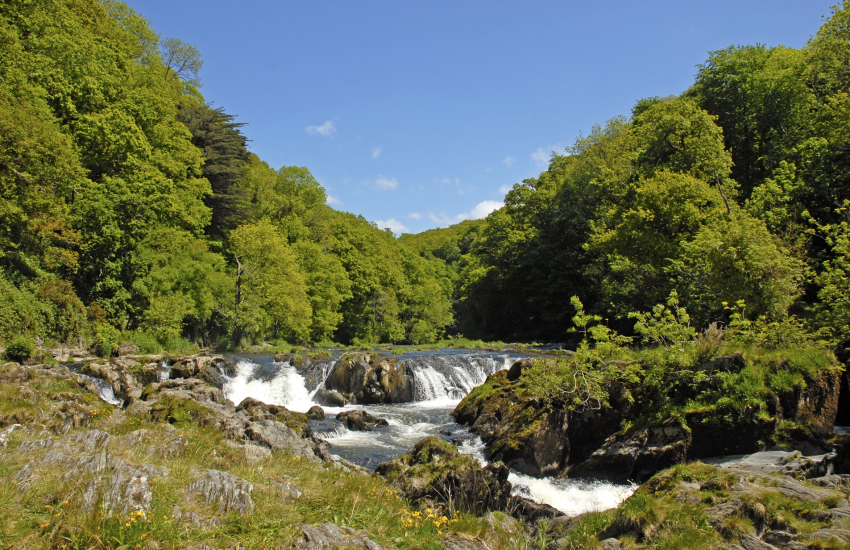 Cenarth waterfalls for salmon leap