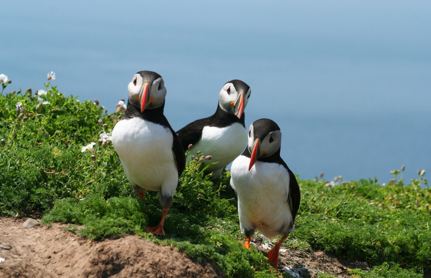 Boat trip to Skomer to see puffins