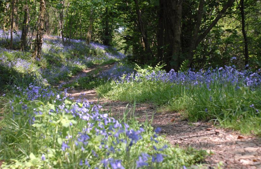 Abermawr beach via a beautiful footpath strewn with wild garlic and bluebells