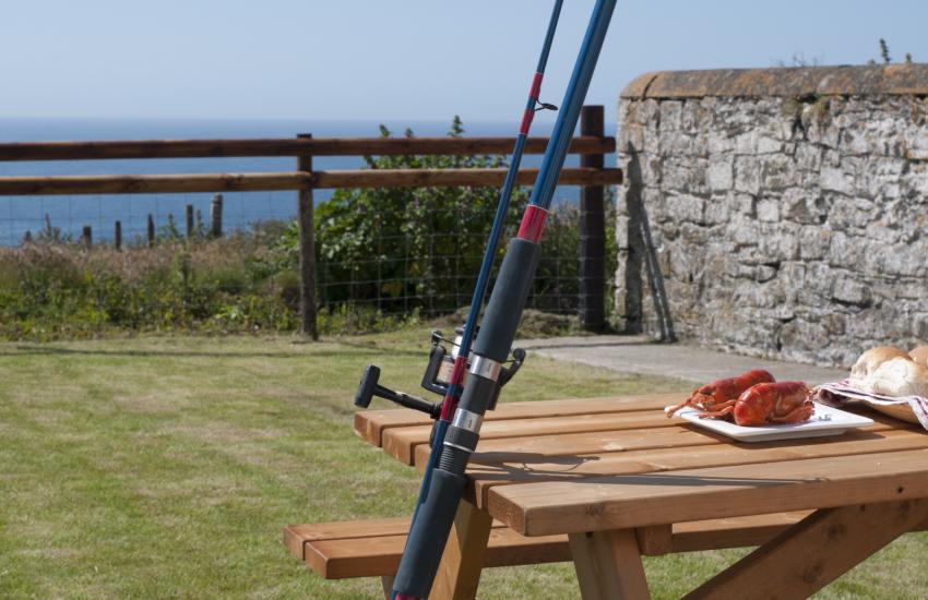 Pet friendly Coastal cottage Pembrokeshire - garden
