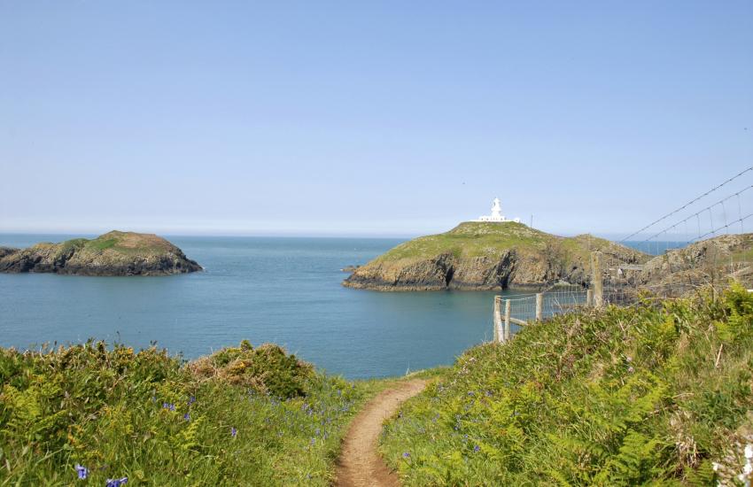 Pembrokeshire Coastal Path up on Strumble Head Peninsula