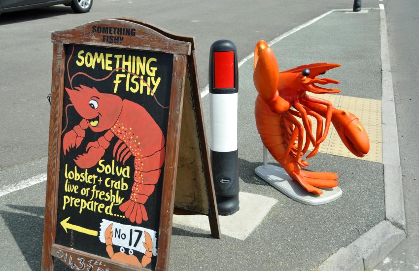 Pembrokeshire lobsters, freshly prepared solva