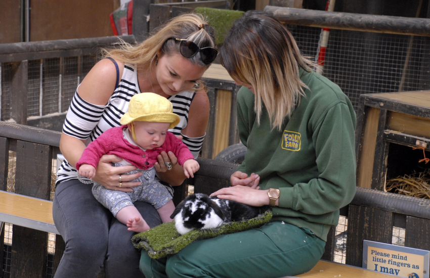 Children will love a day out at Folly Farm Zoo