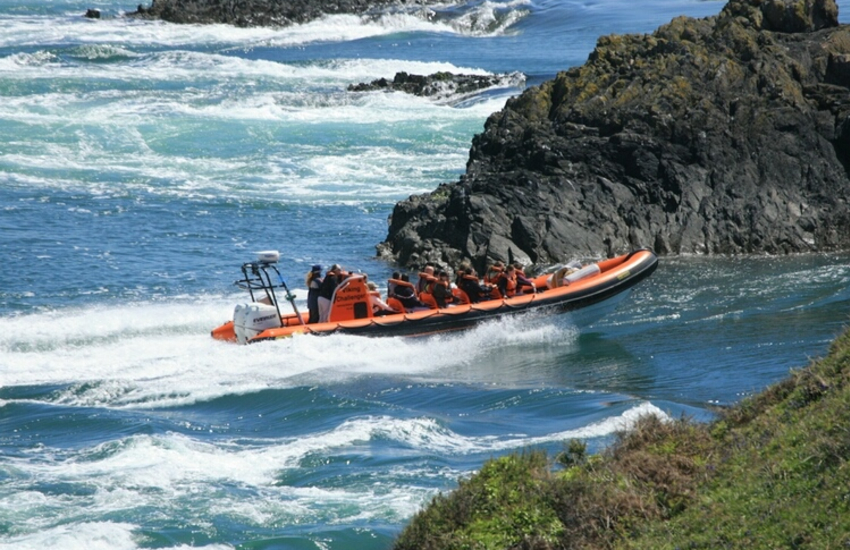 Book a boat trip to explore Ramsey Island