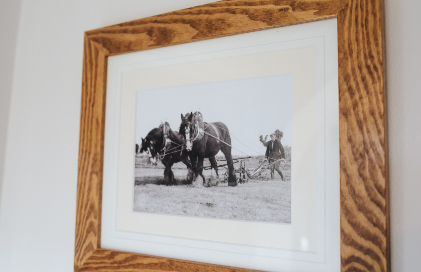 Picture of working shire horses on farm
