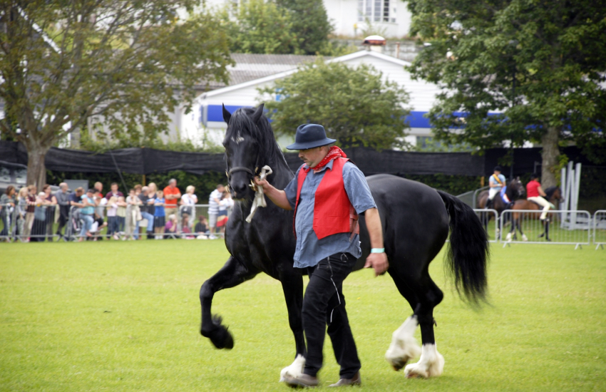 The 'Festival of Welsh Ponies & Cobs' Aberaeron