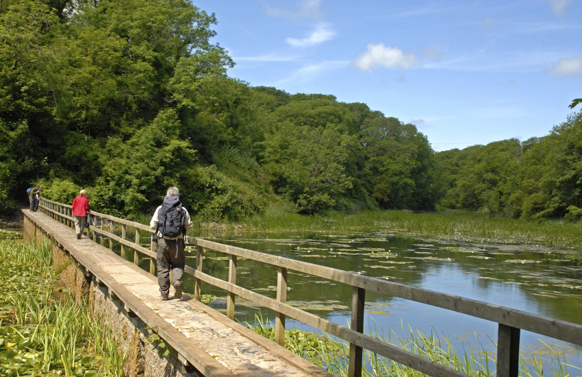 Bosherston Lily Ponds - the freshwater lakes are part of a National Nature Reserve